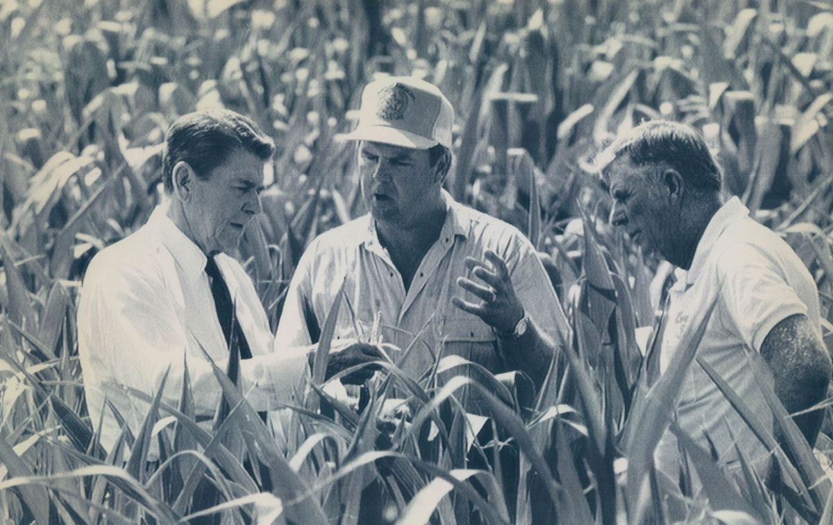 President Ronald Reagan, left, takes a close look at a drought-stricken com field in southern Illinois in 1988. Herman Krone, right, and his son Rick, center, lead Reagan through the field, which they farm in Duquoin.