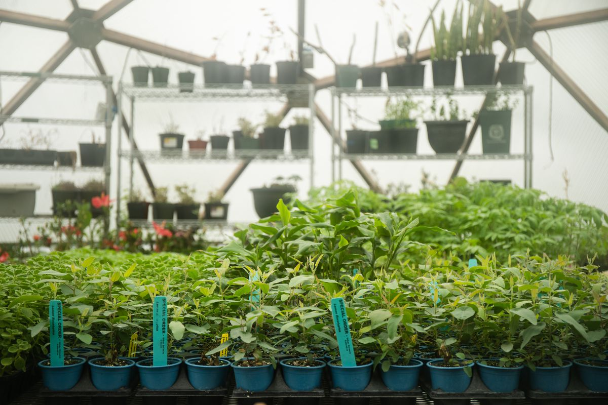 Herbs and vegetables are planted on the farm of Urban Growers Collective.
