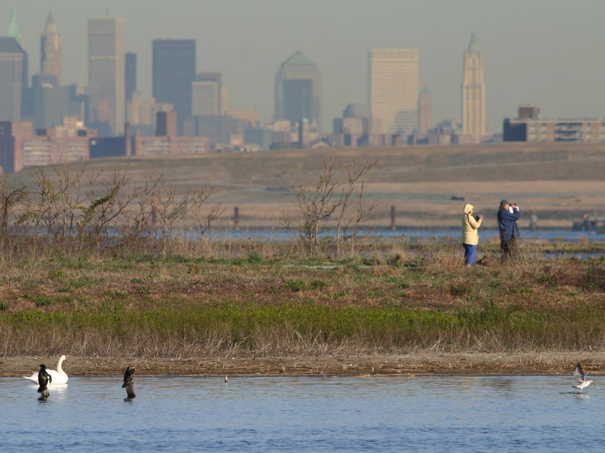 A couple stand in the wild wetlands of Jamaica Bay Wildlife Refuge bird watching with binoculars. In the foreground ducks are coasting on a pond. In the background, various high-rise Manhattan high-rise buildings can be seen.