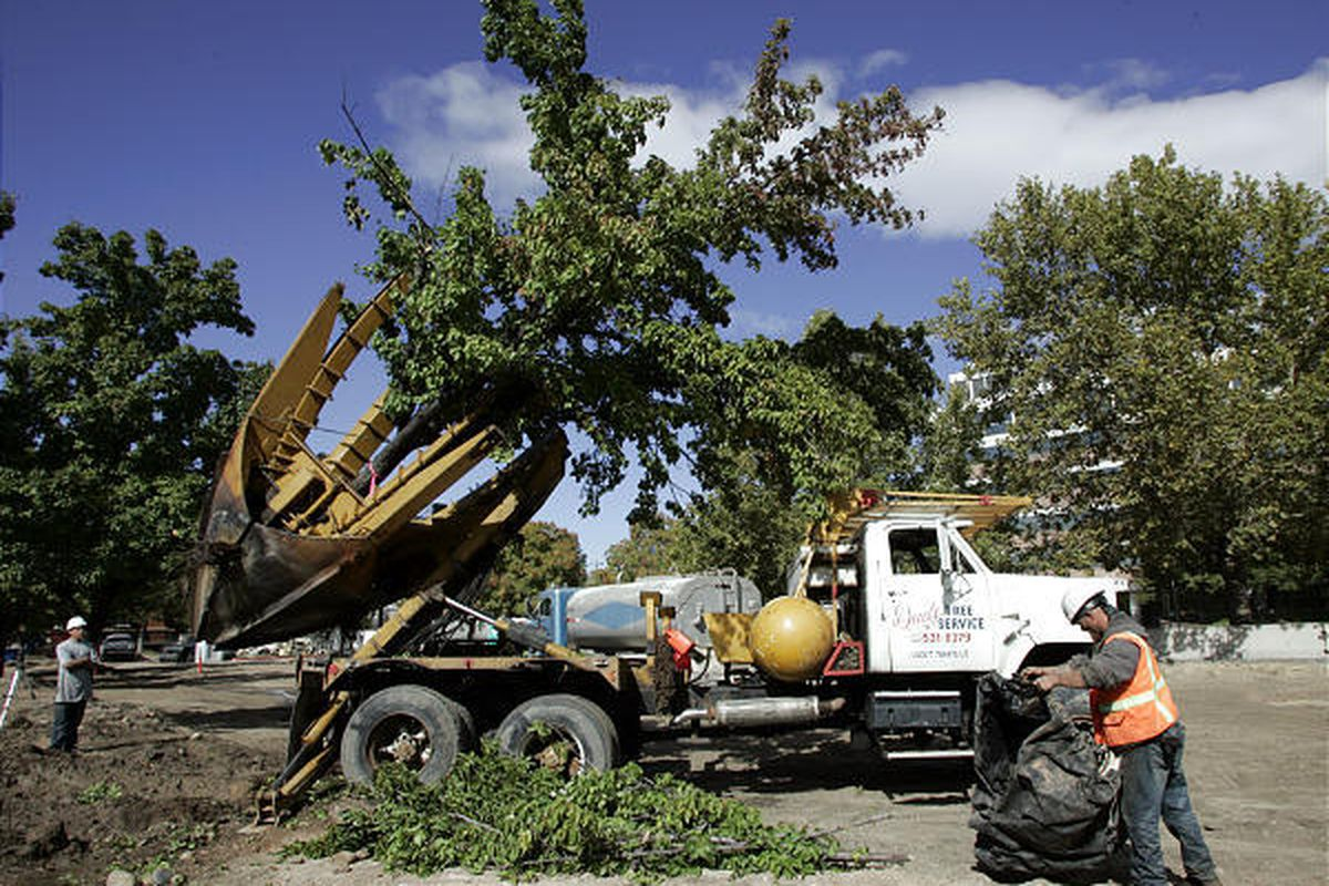 Kory Anderson, left, and Shawn Flemens, both of Dad's Tree Service, work to transplant trees from Trolley Square to tree farms and other locations in Salt Lake City on Friday. A Whole Foods Market will be built on the lot where the trees were standing. Th