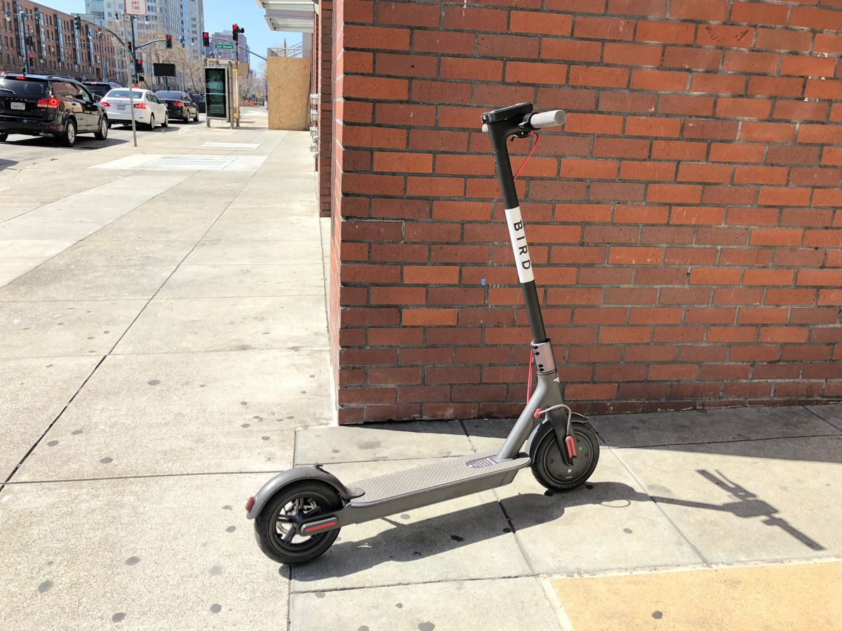 San Francisco Electric Scooters Everything You Need To Know About Basic Scooter Wiring Diagram Speed Bird Specimen Photo By Brock Keeling