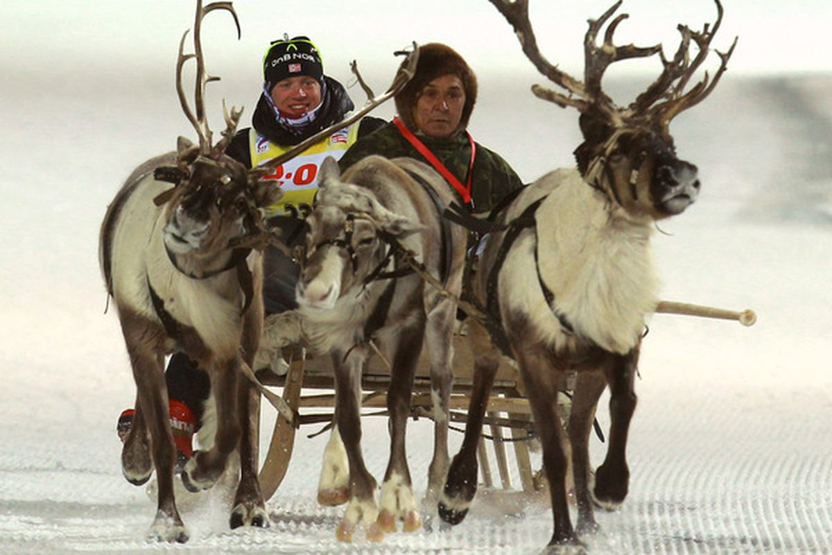 Yes, these are actual reindeer!