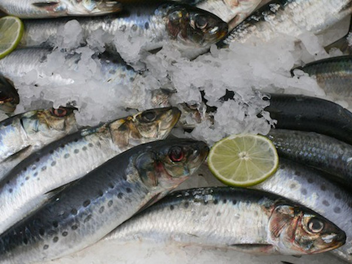 BC Sardines