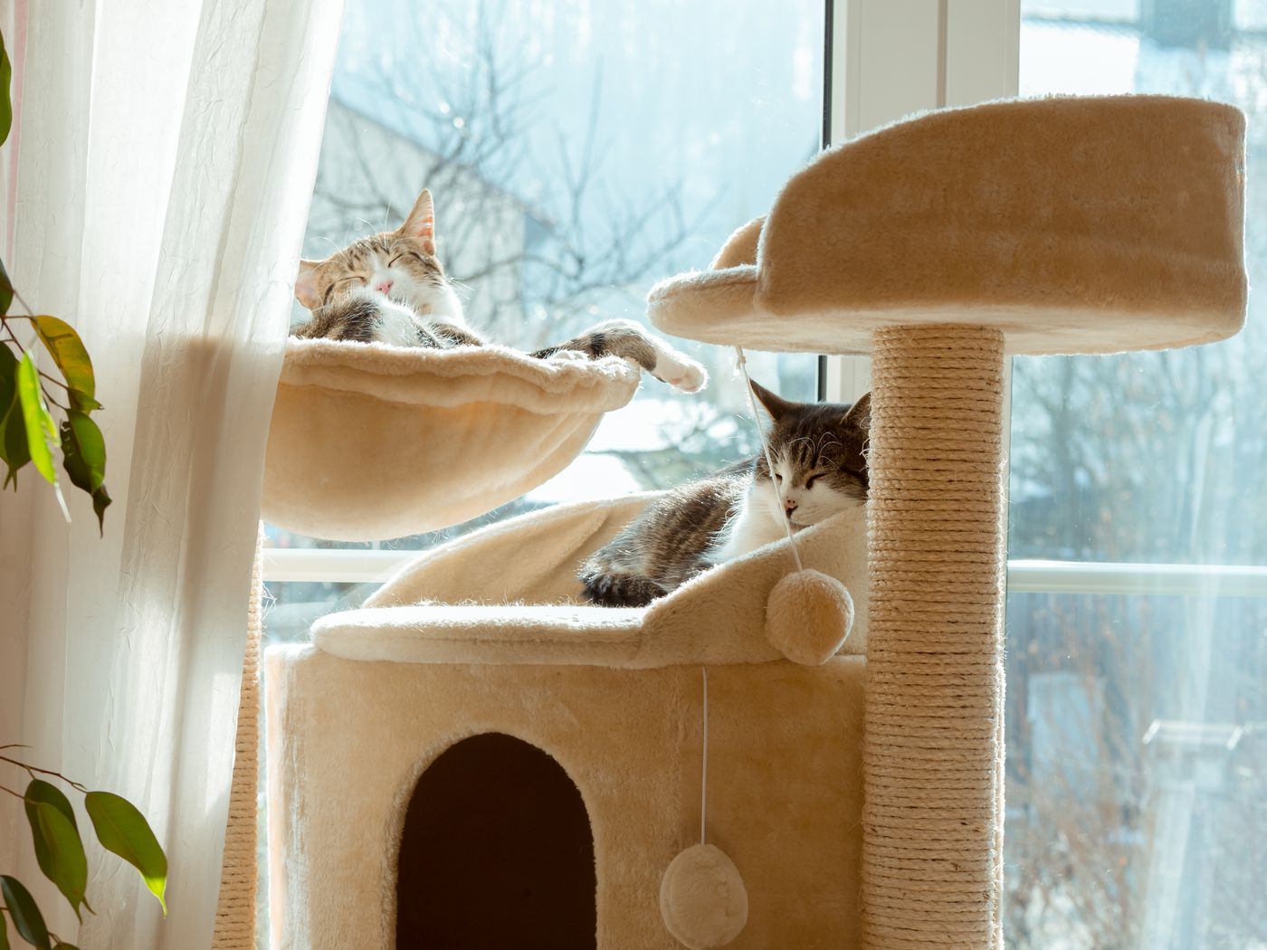 How To Build A Diy Cat Tower In 9 Steps This Old House