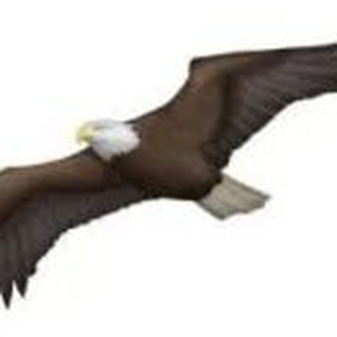 BIG NEWS: There's finally going to be an Eagle emoji on your