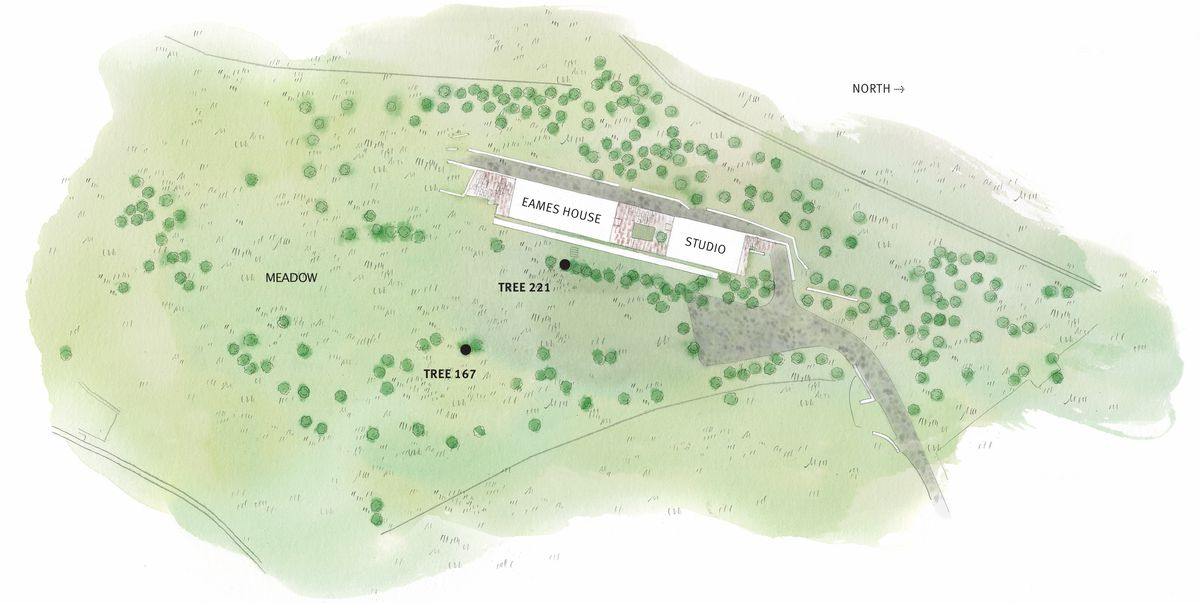 A bird's-eye view illustration of a property show a rectangular house surrounded by trees. Two trees have been marked.