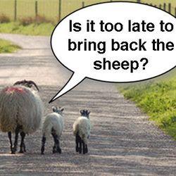 "<span class=""credit"">[<a href=""http://www.molevalleyfarmers.com/mvf/info/sheep"">Photo Credit</a>]</span>"