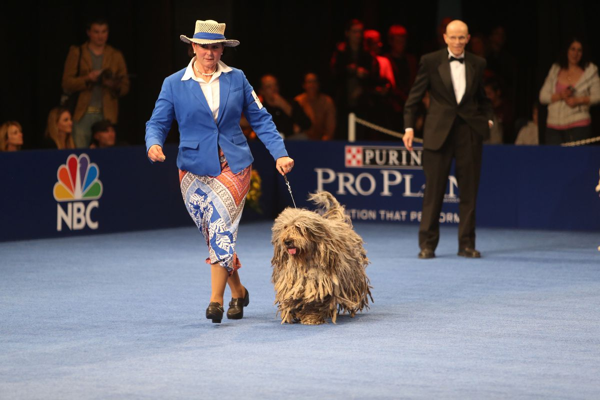 Forget football  The National Dog Show is Thanksgiving's