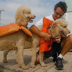 Mike Askew adjusts life jackets on his poodles, Tino and Romeo, Wednesday at his oceanfront home in Kitty Hawk, N.C. He hoped to keep the dogs safe from ocean waves as he packed his house to evacuate.