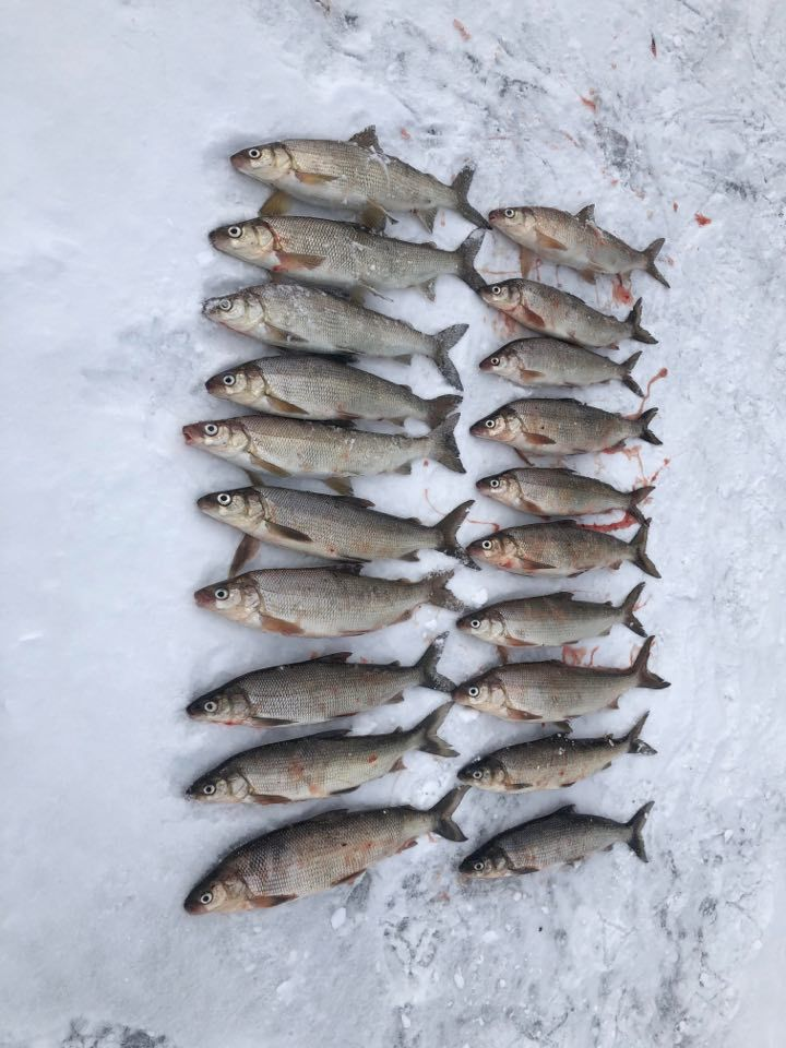 There's been good whitefish on Sturgeon Bay. Provided by Jeremy Jakiel