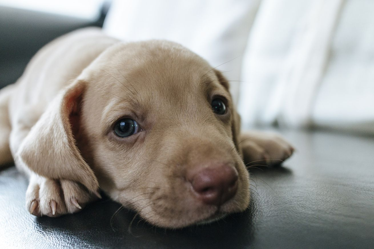 puppies spread antibiotic resistant bacteria in recent diarrhea outbreak