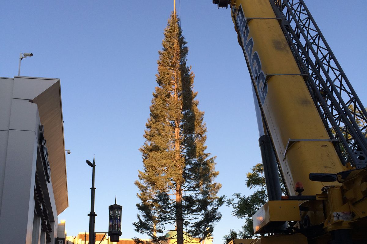 The Grove's 100-Foot Christmas Tree Has Officially Landed