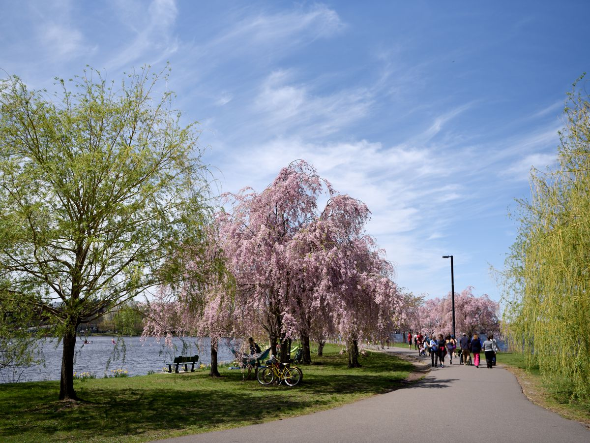 A path with trees on both sides. Some of the trees have pink blossoms. There is a body of water in the distance.