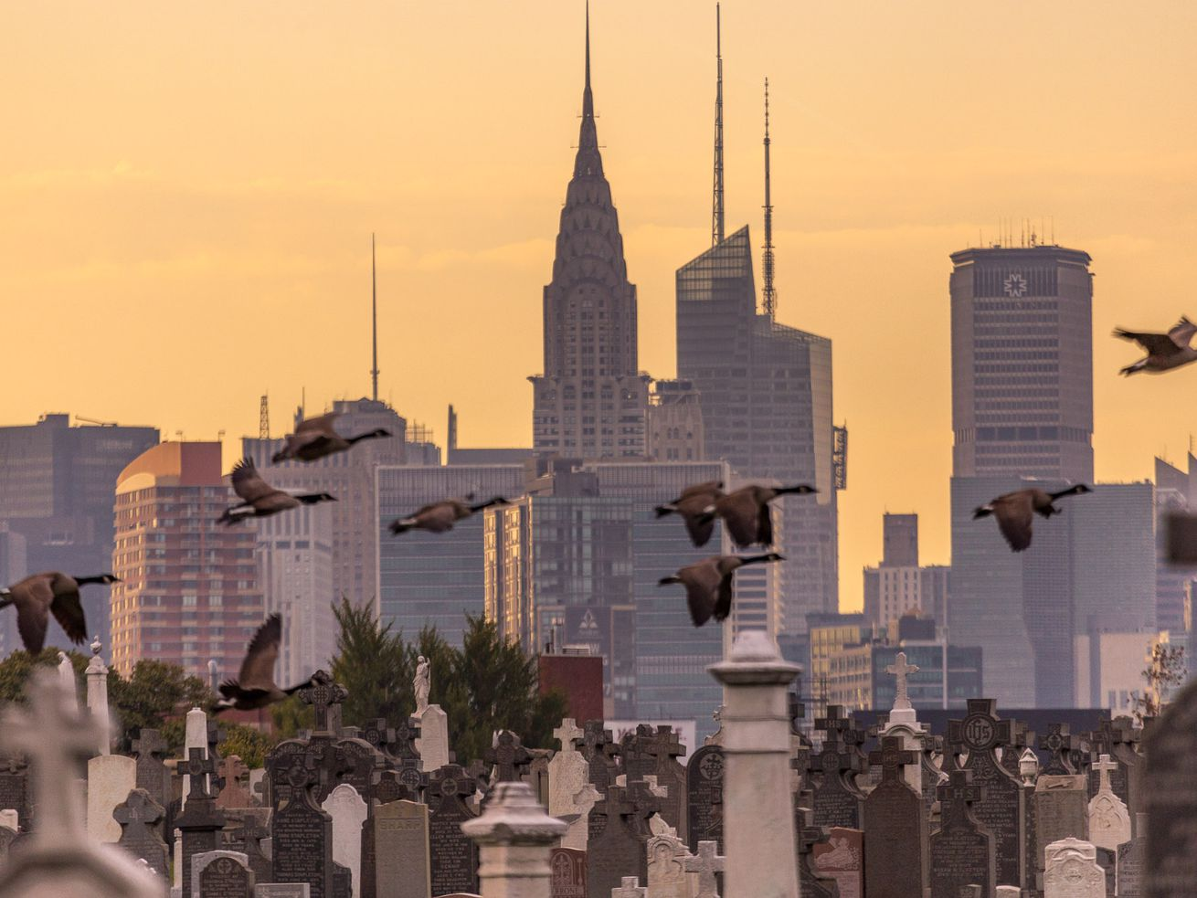 Calvary Cemetery at dusk with the Manhattan skyline in the background. Pigeons fly through the photograph.
