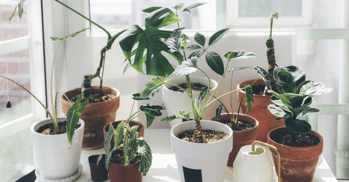 """""""It's no secret that houseplants have become very trendy as of last year, 2020, around the beginning of the coronavirus pandemic,"""" he begins, re"""