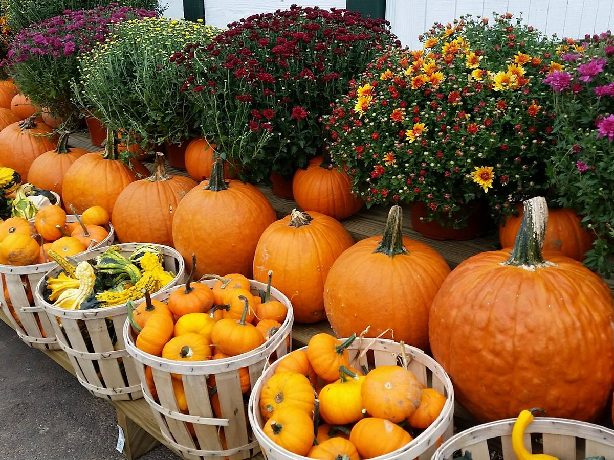 A farm stand with orange pumpkins.. There are baskets of small pumpkins. Behind the baskets are larger carving pumpkins. There are autumnal flowers in the background.