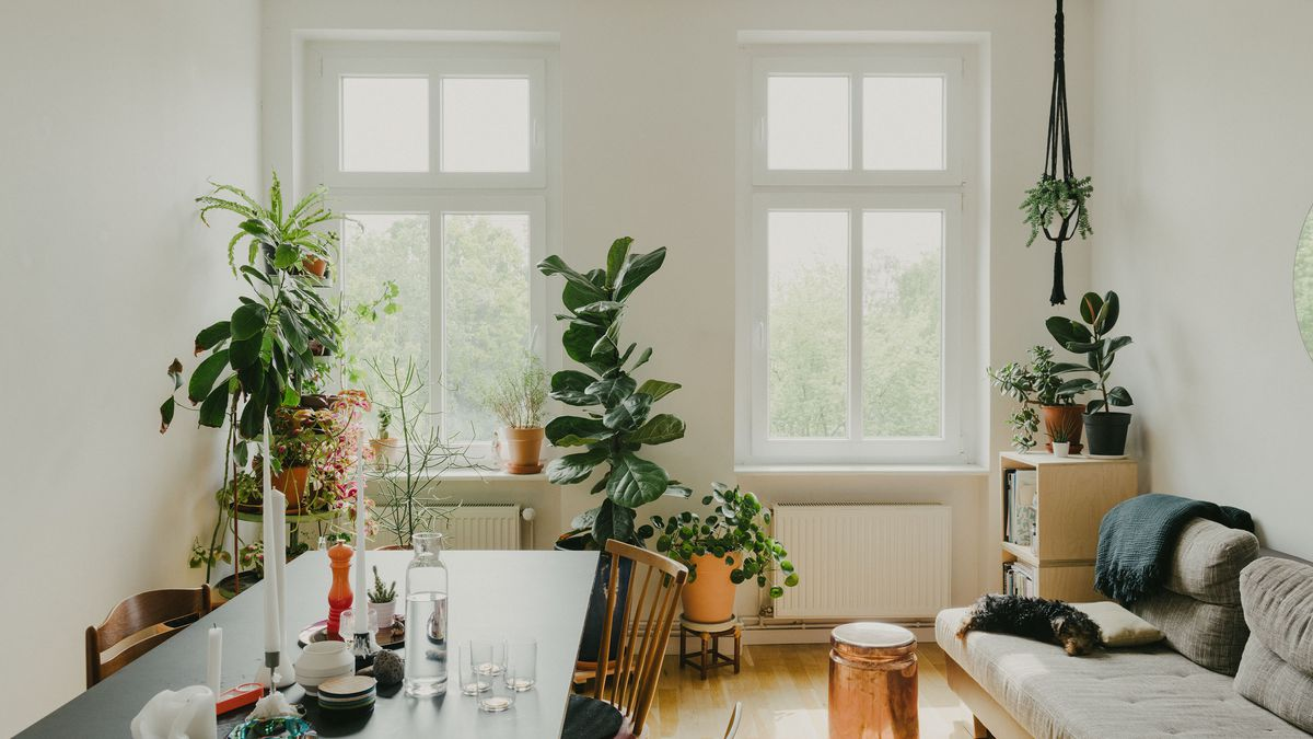 A living room with a long dining table and gray sofa. Plants stack up near the windows overlooking trees.