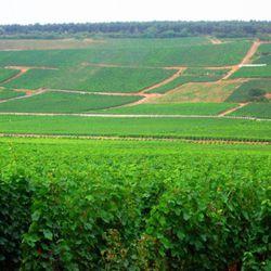 "Vosne Romanée, Burgundy. [Source: <a href=""http://en.wikipedia.org/wiki/French_wine"" rel=""nofollow"">Wikipedia</a>]"