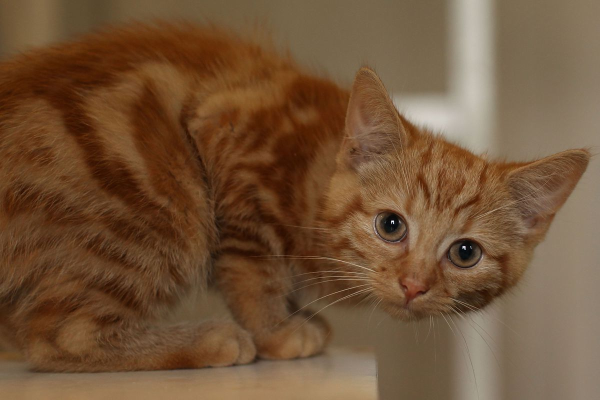 The Kitten Bowl Is Better Than The Puppy Bowl Because Cats Are Better Than Dogs Sbnation Com