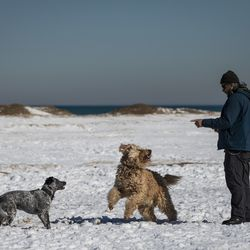 A man plays with dogs at Montrose Dog Beach on the same day the Chicago Park District announced plans to gradually reopen the city's lakefront, playgrounds and indoor swimming pools in response to sustained declines in COVID-19 positivity rates and cases, Tuesday, Feb. 23, 2021.