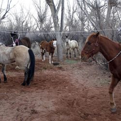 Horses high-lined for the night at Fuller Bottom,  Saturday, April 2, 2011, in the San Rafael Swell in Central Utah.