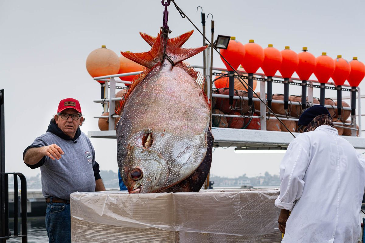 FishmongerTommy Gomes wears a red hat and glasses with his hand stretched towards the camera as a huge disk-shaped opah is lifted by a pulley