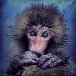 Mobile: Macaque monkey in Japan