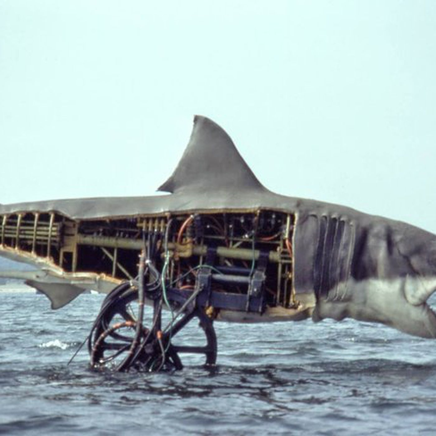 Film History: A Real Shark Fell in Love With The Mechanical Shark While  Filming Jaws - Funny Or Die