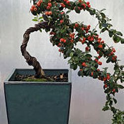 For Bonsai Artist In Provo Enjoyment Is In The Journey Deseret News