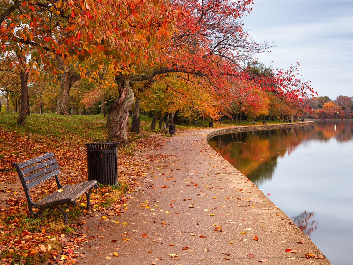 Trees along a basin showing fall foliage. A bunch and a trash can are surrounded by fallen leaves.