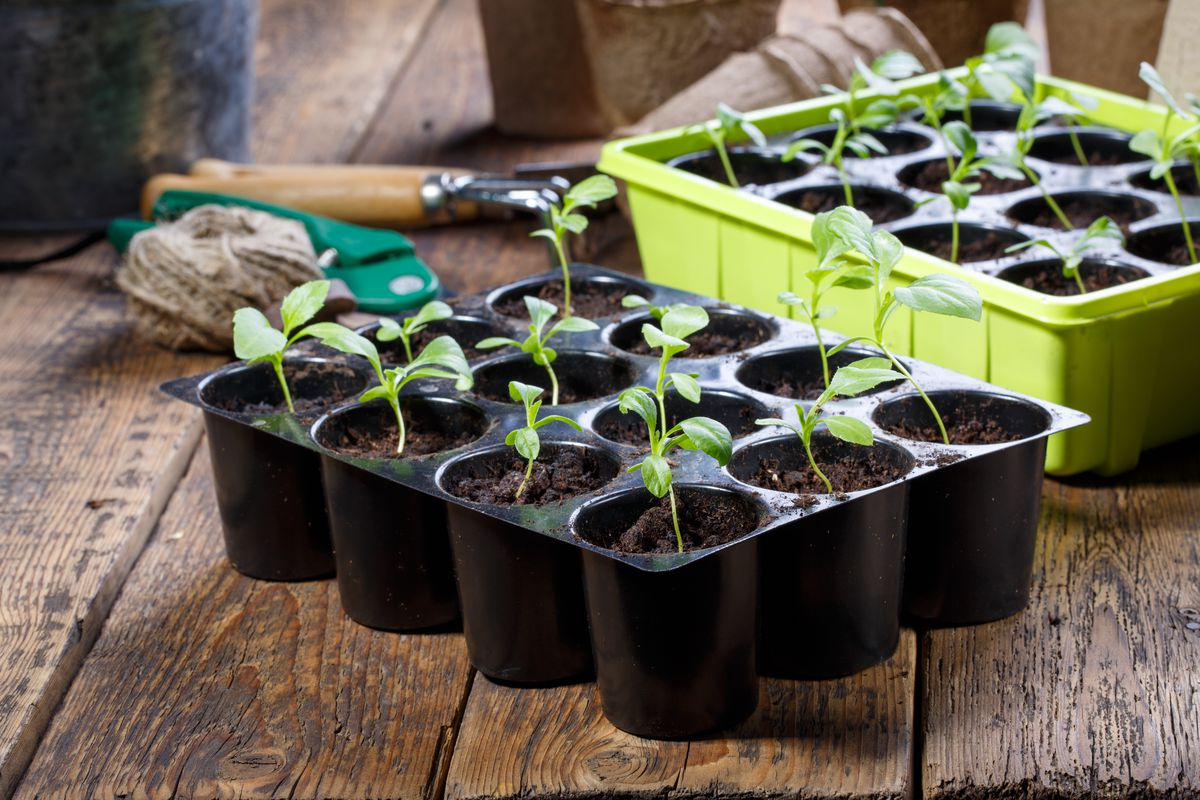 Indoor seed-starter kits are a great way to get a jump on your outdoor planting season.