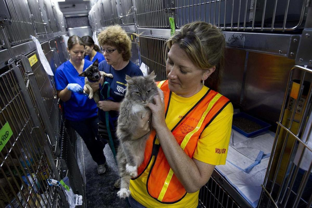 Inga Gibson, right, of Honolulu, and Mindy Gilbert, center, of Jasper, Ala., care for dogs and cats found in the Alberta City community of Tuscaloosa, Ala., Friday, May 13, 2011. Teams from the Humane Society of the United States searched for stray animal