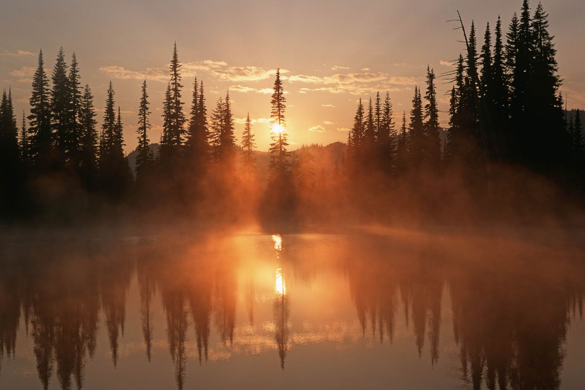 Dawn in temperate rainforest Reflection Lake Mt Rainier National Park Washington USA.