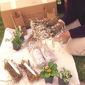 <p>Shopping by catalog or on the Web isn't as risky as it sounds -- most plants arrive in good shape. Though plants are small and some are shipped bare-root, they'll catch up in size with nursery plants.</p>