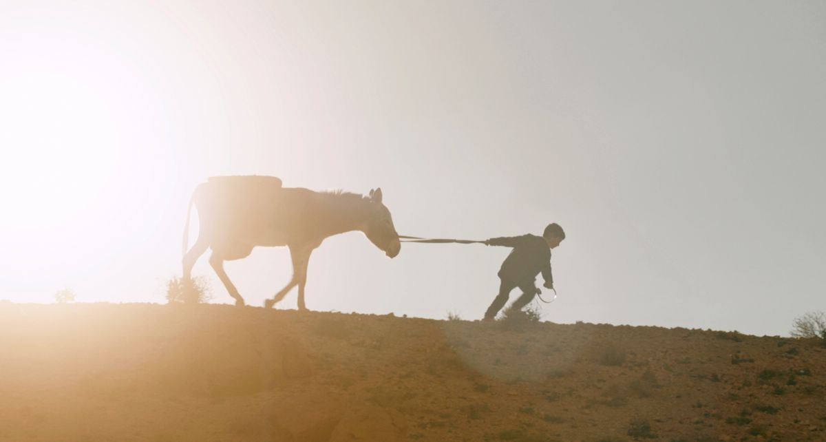 A boy pulls a donkey along a hill.