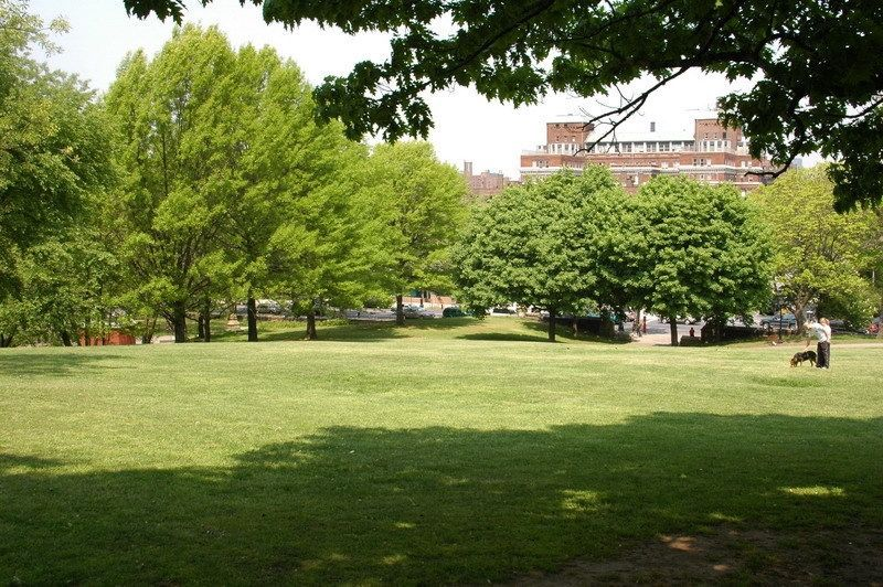 A park clearing with grass. In the distance are multiple assorted trees.