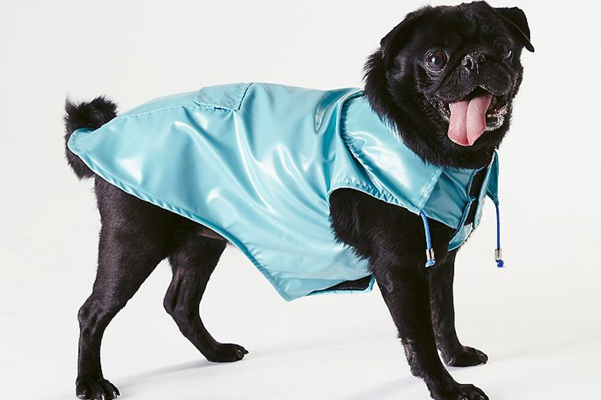 """Ware of the Dog Anorak Raincoat, <a href=""""http://www.freepeople.com/pet-boutique/anorak-raincoat/_/PRODUCTOPTIONIDS/BEE1C344-4601-4985-97DB-EB5BCFE2AD06/"""">$70 to $82</a>"""