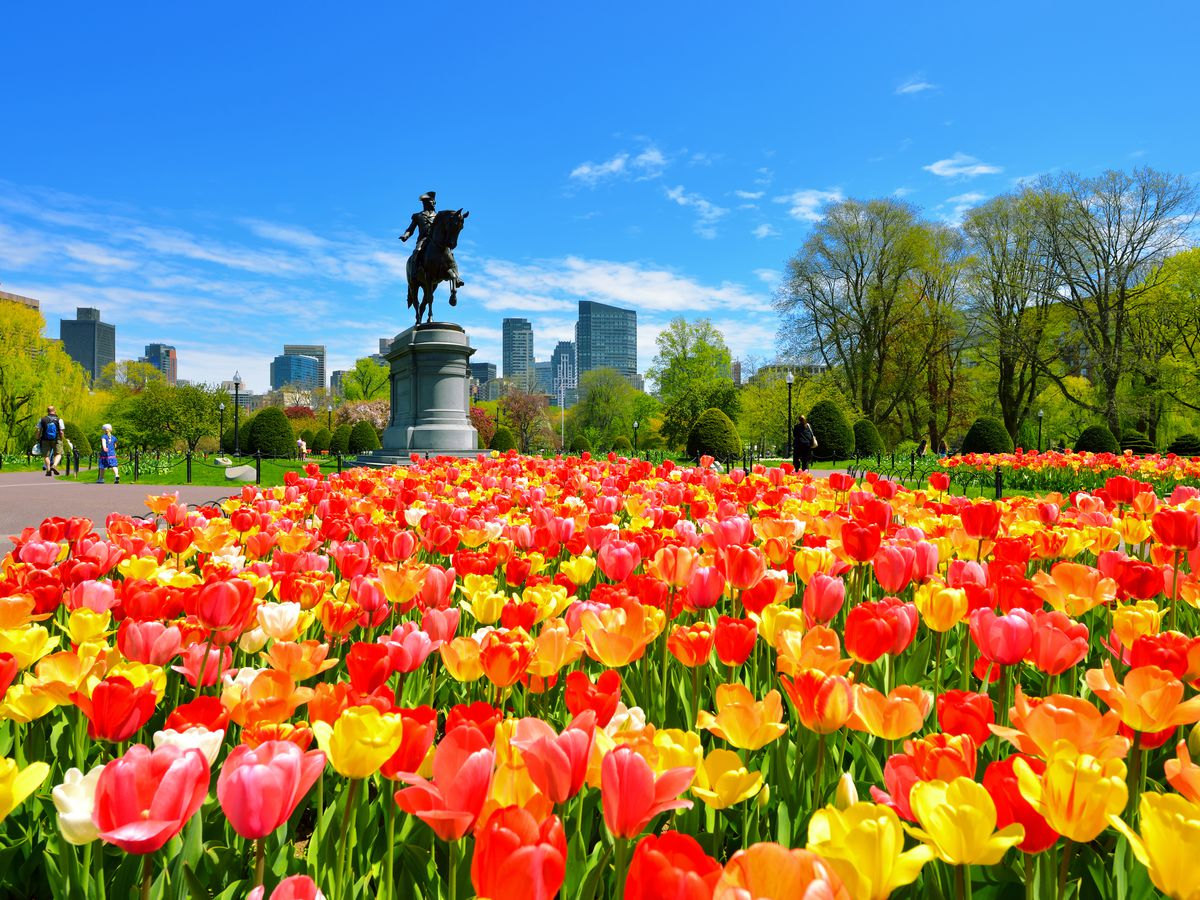 A large statue of a man on horseback is in the background and in the foreground are colorful flowers.