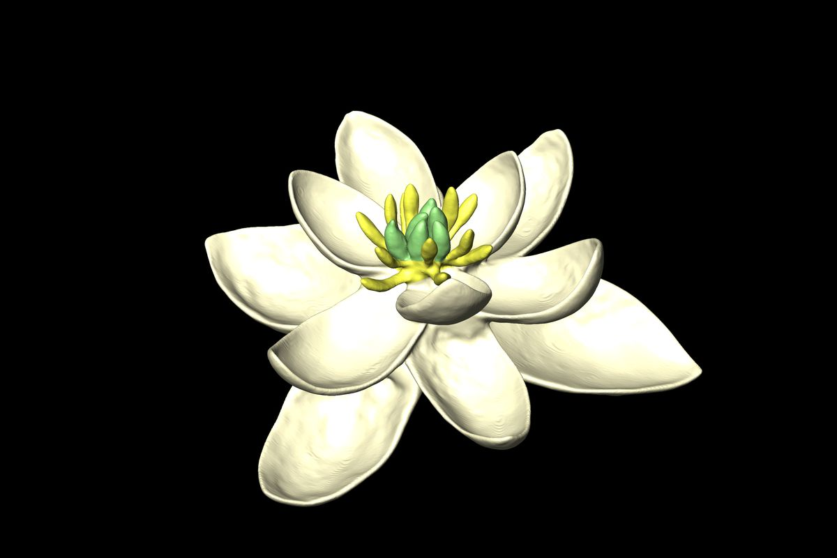 The Earliest Flower Ancestor Had Both Male And Female Parts The Verge