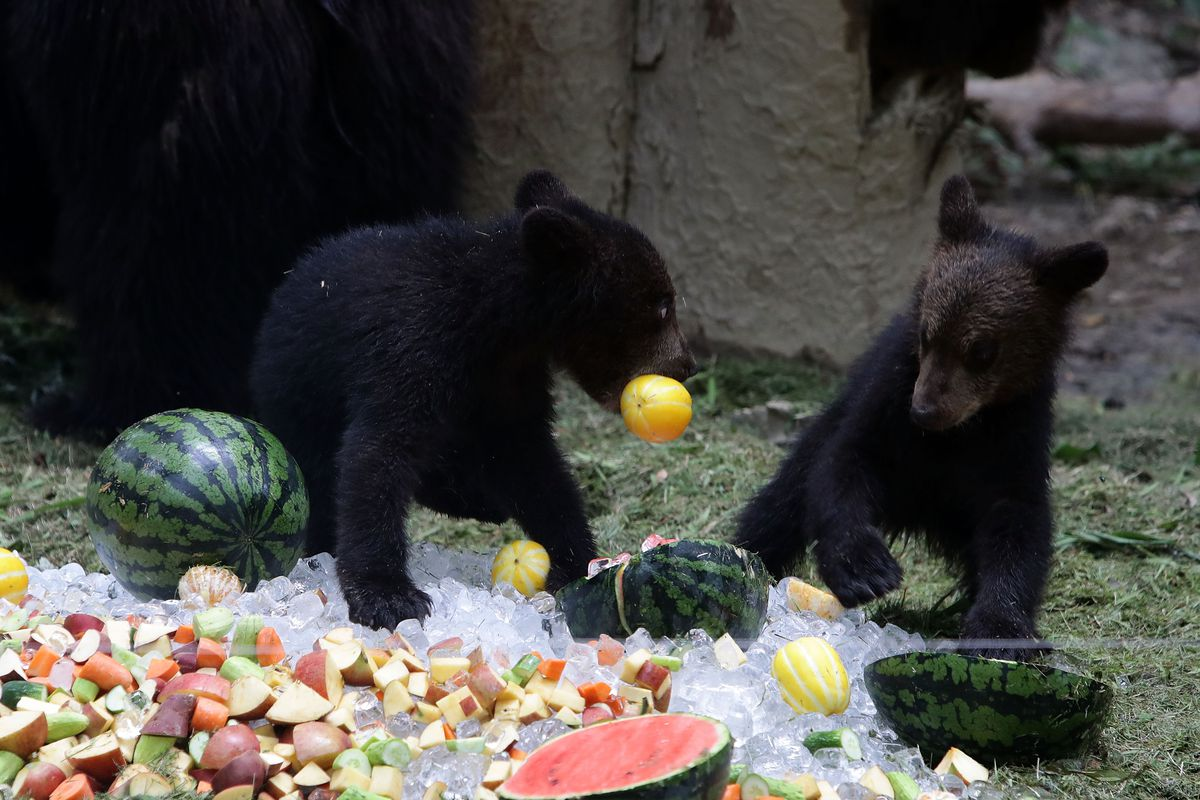 Animals Enjoy Icy Sweets In Hot Seoul