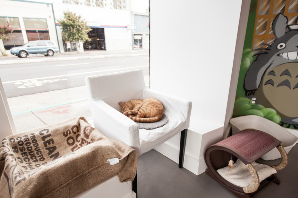 Oakland's Cat Town Cafe