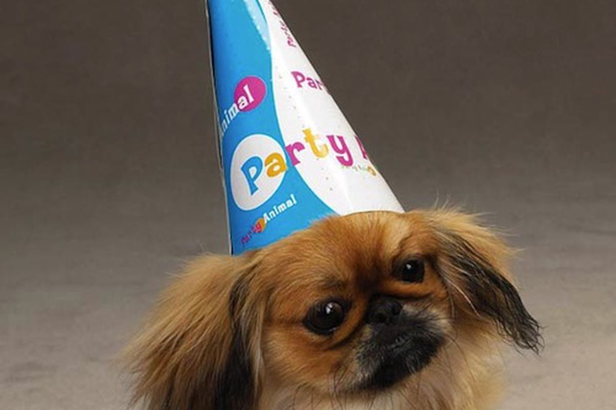 """Need something to wear to the party? <a href=""""http://www.baxterboo.com/dog/supplies.cfm/dog-party-hats-cat-party-hats"""">BaxterBoo</a> has you covered."""