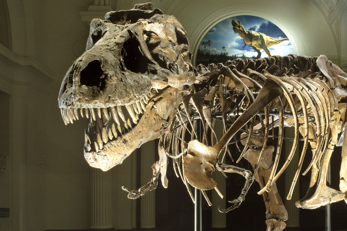 T. rex skeleton at the Field Museum