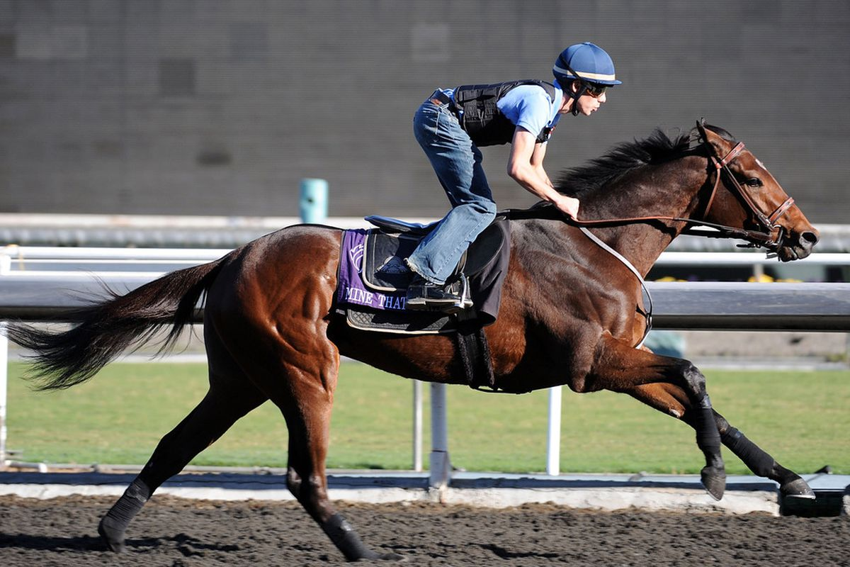 ARCADIA, CA - NOVEMBER 02: Joe Talamo rides Mine That Bird at a morning workout in preparation for the Breeder's Cup 2009 at the Santa Anita Race Track on November 2, 2009 in Arcadia, California. (Photo by Harry How/Getty Images)