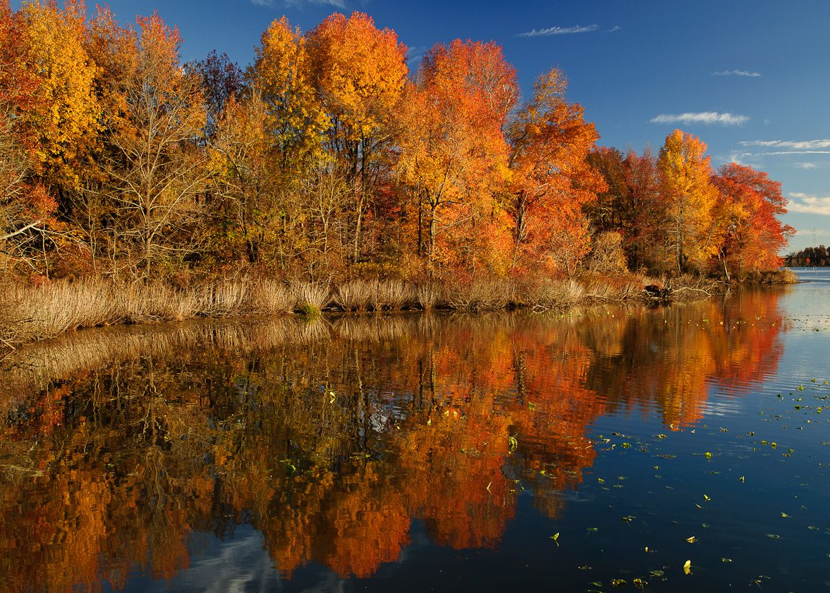 A pond at John Heinz National Wildlife Refuge at Tinicum in Philadelphia. The pond is lined with many trees that have colorful leaves.