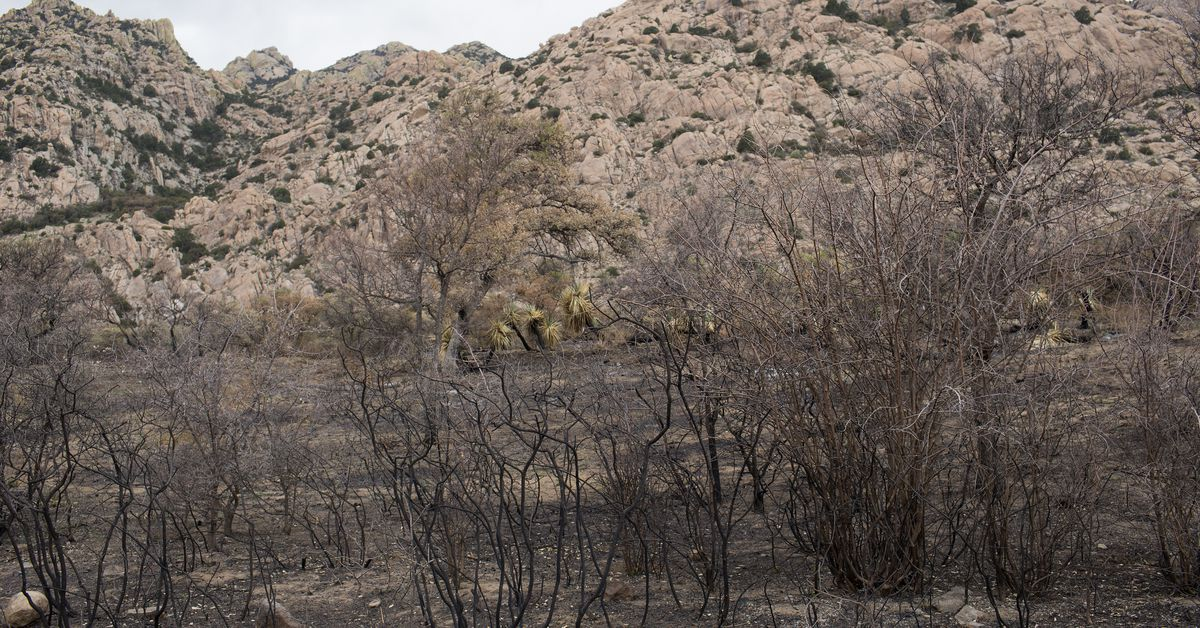 What to expect from the 2021 fire season in the West