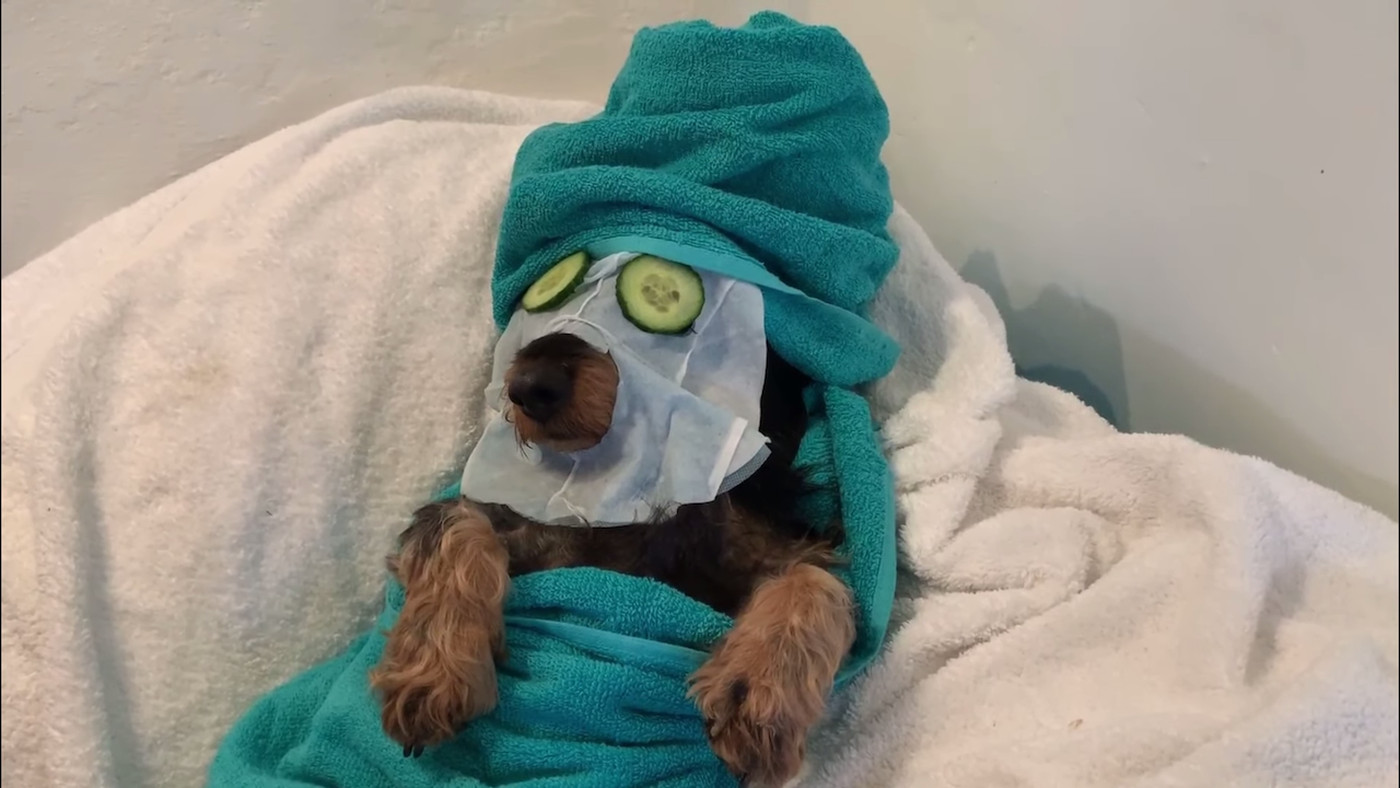 A Woman Gave Her Pets Spa Treatment... It's So Precious... I Can't Handle It