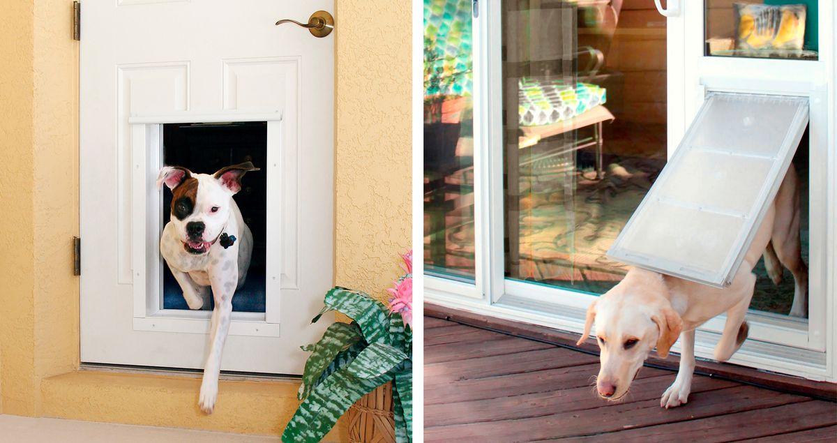 Fall 2021 Animal House, dog doors