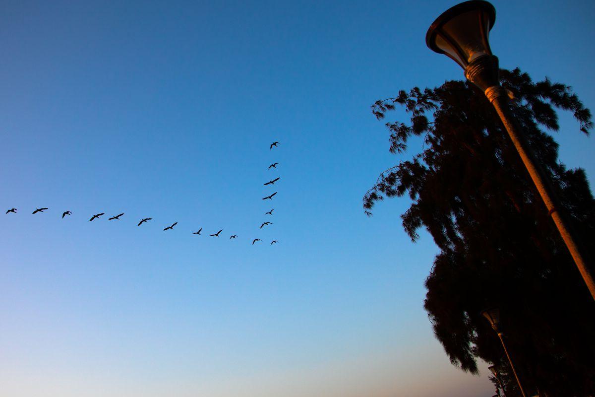Birds flying on a v-formation, Benguela Province, Benguela, Angola...