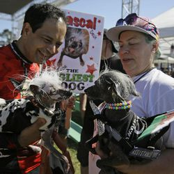 Rascal, left, a Chinese Crest, held by Dane Andrew of Sunnyvale, Calif., meets Chase, right, a Chinese Crested Harke, held by Storm Shayler, right, of Britain, before the start of the World's Ugliest Dog Contest at the Sonoma-Marin Fair Friday, June 23, 2017, in Petaluma, Calif.